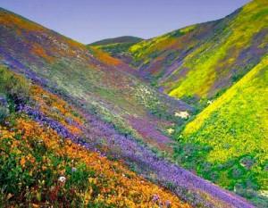 flowers-himalayas-moiostrov31-web-166